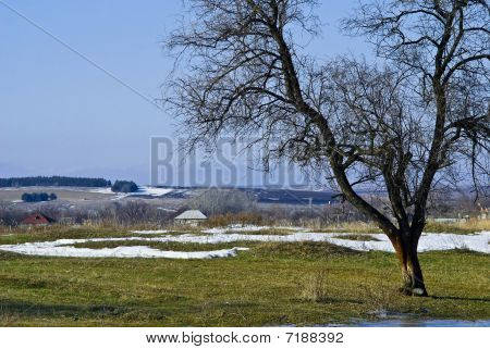 Spring Rural Landscape With A Tree