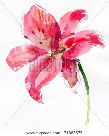 Watercolor flower - isolated on white background