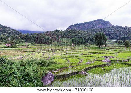 Rice Field Terraces In Doi Inthanon, Ban Pha Mon Chiangmai Thailand