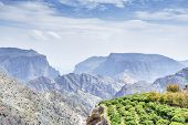 stock photo of jabal  - Image of landscape trees on Jebel Akhdar Saiq Plateau in Oman  - JPG