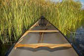 picture of cattail  - canoe on a lake shore with cattails - JPG