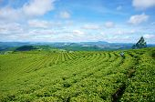 picture of mountain chain  - Impressive landscape at Dalat Vietnam in sunny day amazing cloudy sky chain of mountain far away people on farm beautiful tea plantation wonderful country view for Da Lat travel