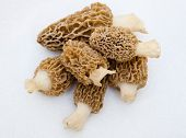 pic of morel mushroom  - Morchella Morels Sponge Mushrooms on white - JPG