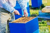 picture of pry  - Beekeeper checking the box  - JPG