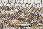 ������, ������: Snake Leather