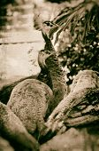 foto of peahen  - Image of a flock of peahens finished in a antiqued wet plate technique - JPG