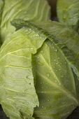 picture of water cabbage  - Green cabbage with water drops close up - JPG