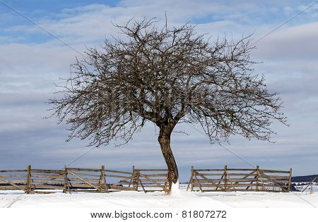 Nice Winter Landscape With Tree