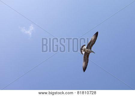 Seagull Flying Over The Blue Sky