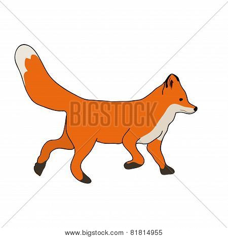 Cute fox run