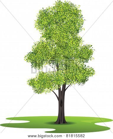 Ash Tree - Illustration