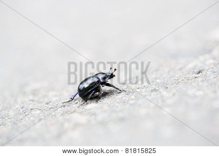 Bug Trying To Climp Up The Road