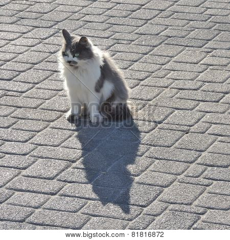 Cat Sitting On The Pavement
