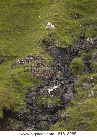 Scottish Landscape With Sheep In Skye Isle. Quiraing. Scotland. Uk