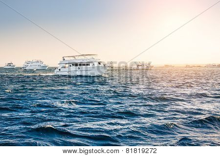 White Yachts In The Red Sea