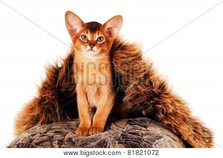 Sitting Kitten Portrait
