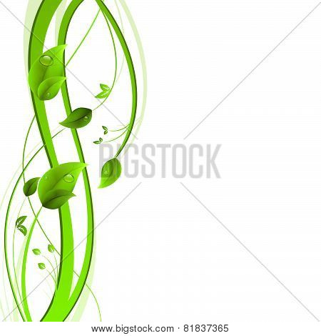 Nature concept, stems and leaves on a white background
