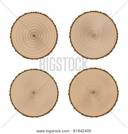 The transverse structure of the tree trunk.Stock Vector Illustration