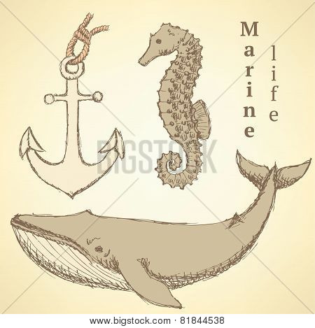 Sketch Seahorse, Whale And Anchor In Vintage Style