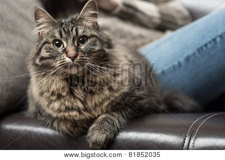 Beautiful Cat On The Sofa