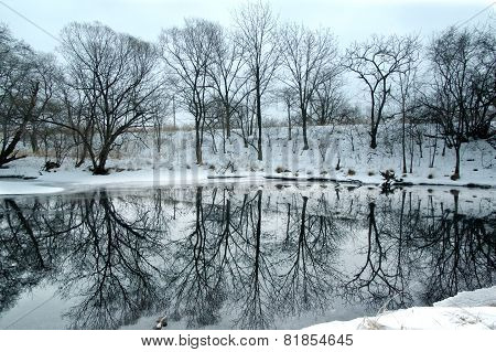 Copse Of Bare Deciduous Trees In Winter Reflected