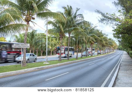 Traffic Island Of Coconuts