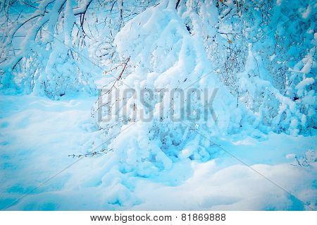 Branch Covered With Snow, Blue Color