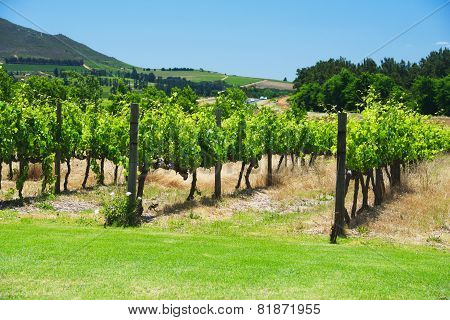 South Africa vineyard valley landscape