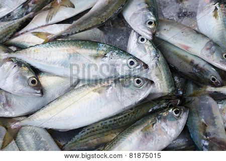 Background of fresh sea fish