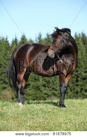 Nice Czech Sport Pony In Autumn