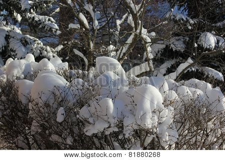 Close up of Fresh white snow on trees and various plants