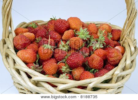 Ripe strawberry in a basket