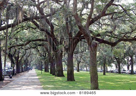 Walkway in Savannah