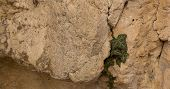foto of creeping  - the wild ivy creeping in the rock - JPG