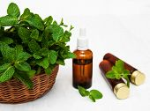 picture of mint-green  - Bottle of mint oil and fresh mint on a old wooden background