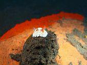 foto of slug  - The surprising underwater world of the Bali basin, true sea slug ** Note: Shallow depth of field - JPG