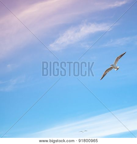 Seagulls Flying On Bright Cloudy Sky Background