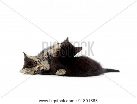 Two Cute Kittens Playing