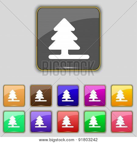 Christmas Tree Icon Sign. Set With Eleven Colored Buttons For Your Site. Vector