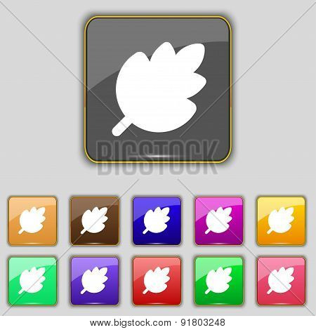 Leaf, Fresh Natural Product Icon Sign. Set With Eleven Colored Buttons For Your Site. Vector
