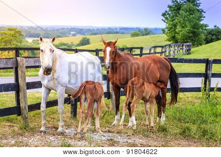 Two manes feeding their young on a farm in Central Kentucky