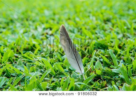 Feathers On The Lawn