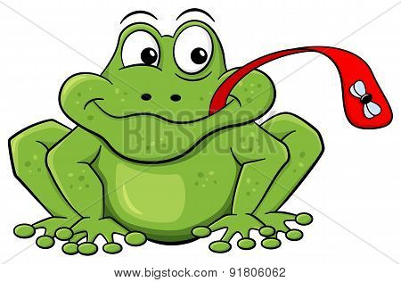 Frog Catches Fly With His Tongue