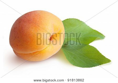 Apricots Isolated On A White Background.
