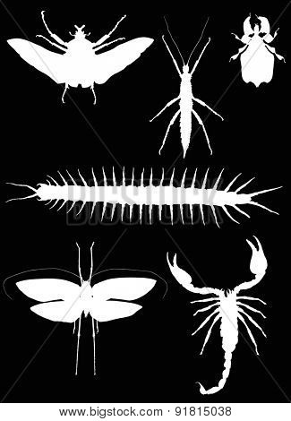illustration with insect collection isolated on black background
