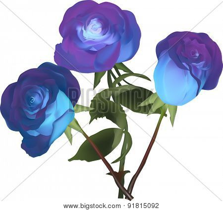 illustration with blue rose flowers isolated on white background