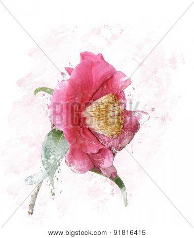 Digital Painting of Pink Rose