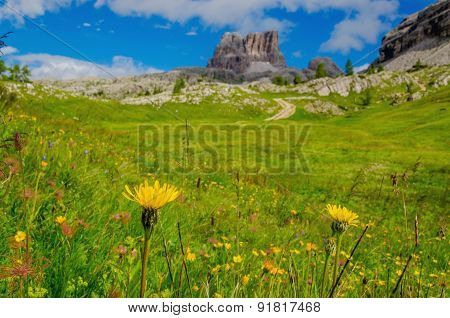 Amazing landscape with flowers, Dolomites in Italy