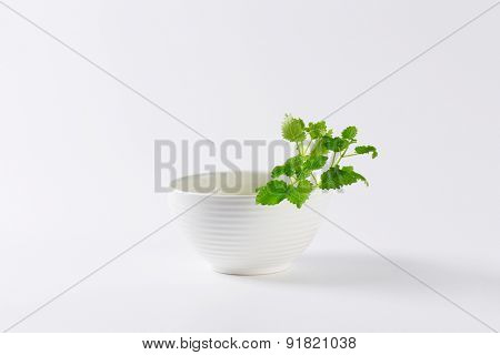 fresh pieces of lemon balm with pure white bowl