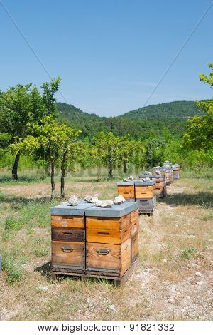 Many bee hives outdoor in orchard